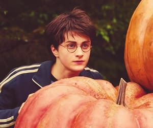 harry potter, pumpkin, and books image