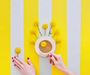coffee, flowers, and stripes image