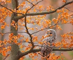 autumn, owl, and leaves image