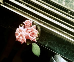 aesthetic, beautiful, and bloom image