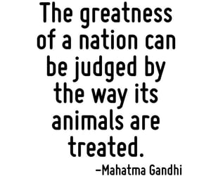 animal, judge, and quotes image