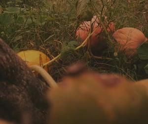 autumn, Halloween, and pumpikins image