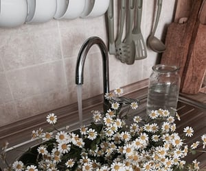 flowers, daisy, and water image
