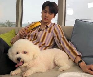 exo, kpop, and ohsehun image