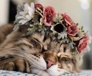 animals, cat, and pet image