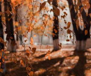 autumn, autumn colors, and fall image