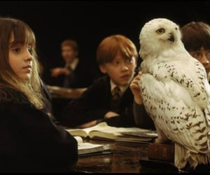 harry potter, ron weasley, and hermiona granger image