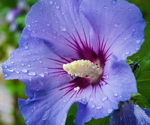 flores, flowers, and purple image