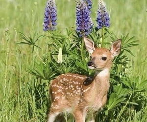 animals, nature, and fawn image