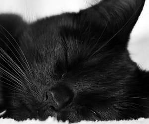 animal, sleep, and meaw image