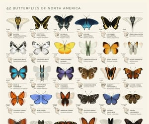 butterfly, aesthetic, and art image