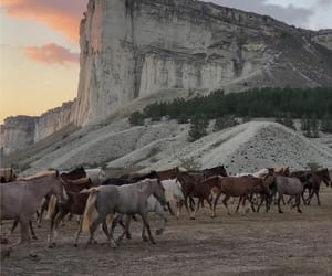 horses, landscape, and mountain image