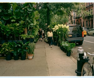 new york, places, and spring image