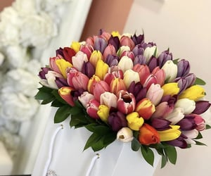 colors, elegance, and tulips image