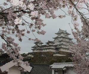 aesthetic, japan, and sakura image