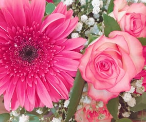 beauty, pink, and flower image