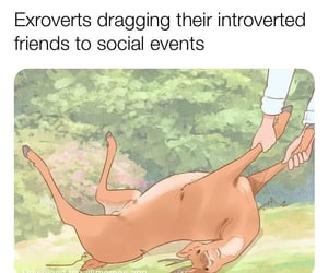 meme, extroverts, and funny image