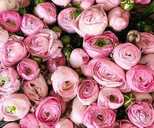 rose, flowers, and peonies image