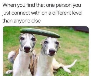 friendship, soulmate, and relatable image