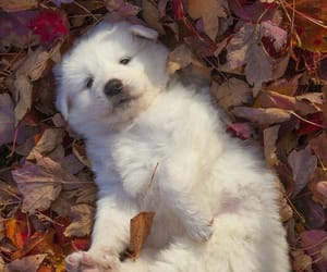 dog, cute, and autumn image