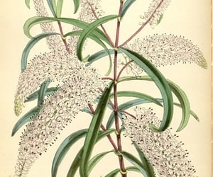 periodicals, botanical illustration, and pictorial works image