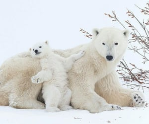 animals, bears, and naturaleza image