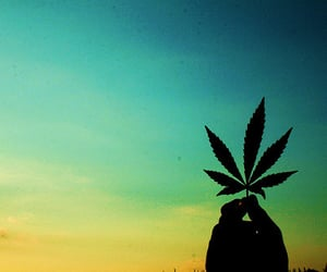 flower, legalize, and cannabis image