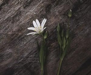 background, dark, and flower image