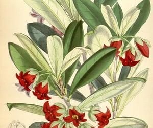 botany, periodicals, and botanical illustration image