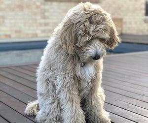 animals, chien, and puppy image