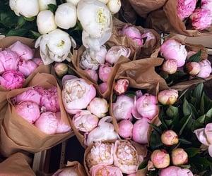 flowers, peonies, and bloom image