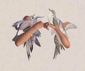 art and bird image
