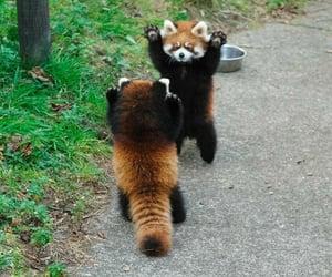 panda and animals image