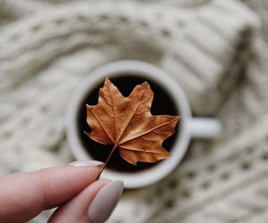 aesthetic, beauty, and fall image