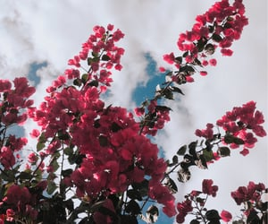 inspiration, sky, and flowers image