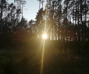 beauty, forest, and widok image