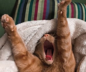green, cat, and waking up image