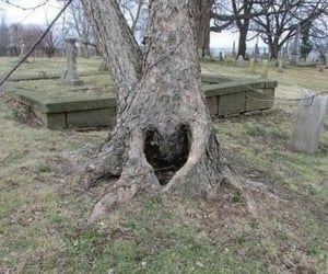 tree, heart, and archive image