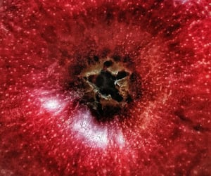 apples, burgundy, and close up image