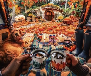 pumpkin, autumn, and cosy image
