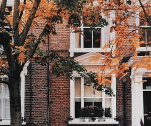 aesthetics, building, and windows image