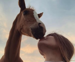 animal, horses, and furry friends image