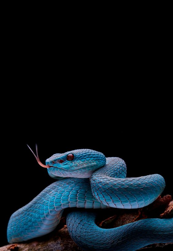 animal, blue, and snake image