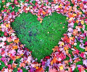 automne, autumn, and heart image