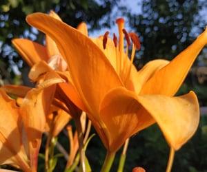 flower, shine, and kurdi image