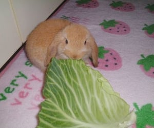 bunny, cute animal, and strawberry image