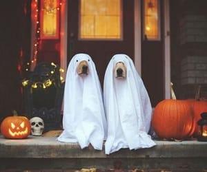 dog, Halloween, and pumpkin image