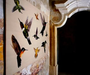 art and birds on my wall image