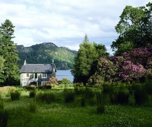nature, flowers, and house image
