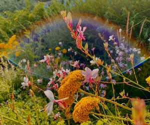 flowers and rainbow image